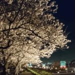 三郷でも夜桜が楽しめる上口へいってみよう!