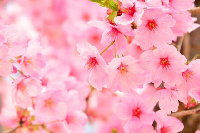 三郷春まつり2019が4月13日(土)に開催されます